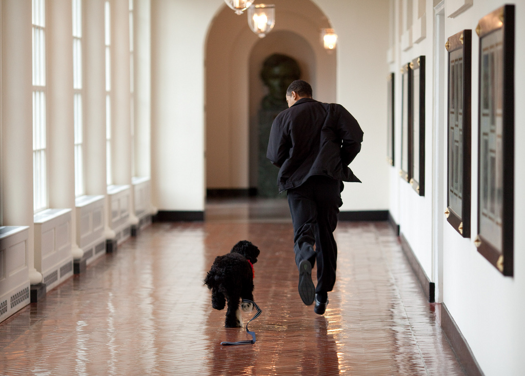 March 15, 2009 ÒThe Obama family was introduced to a prospective family dog at a secret greet on a Sunday. After spending about an hour with him, the family decided he was the one. Here, the dog ran alongside the President in an East Wing hallway. The dog returned to his trainer while the ObamaÕs embarked on their first international trip. I had to keep these photos secret until a few weeks later, when the dog was brought ÔhomeÕ to the White House and introduced to the world as Bo.Ó (Official White House photo by Pete Souza) This official White House photograph is being made available only for publication by news organizations and/or for personal use printing by the subject(s) of the photograph. The photograph may not be manipulated in any way and may not be used in commercial or political materials, advertisements, emails, products, promotions that in any way suggests approval or endorsement of the President, the First Family, or the White House.